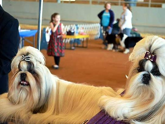 These two beauties rest during the 2016 All-Breed Dog