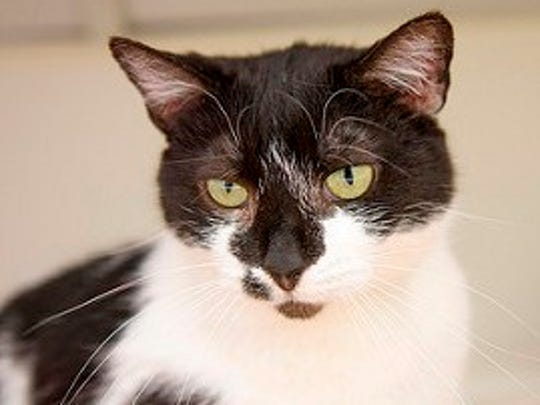 Goldeen is the featured cat for this week at Tabby's Place.