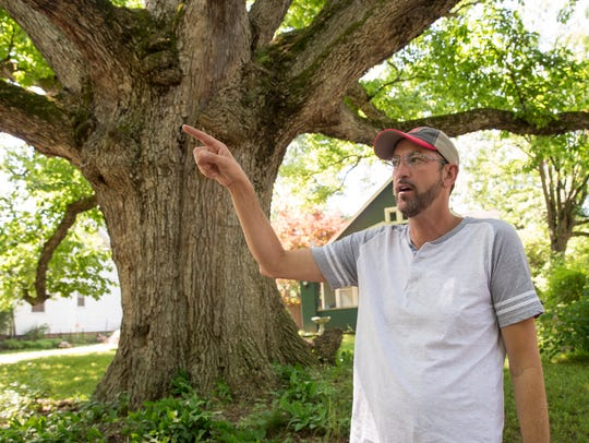 The Temple tree, a 400-year-old chinquapin oak on property