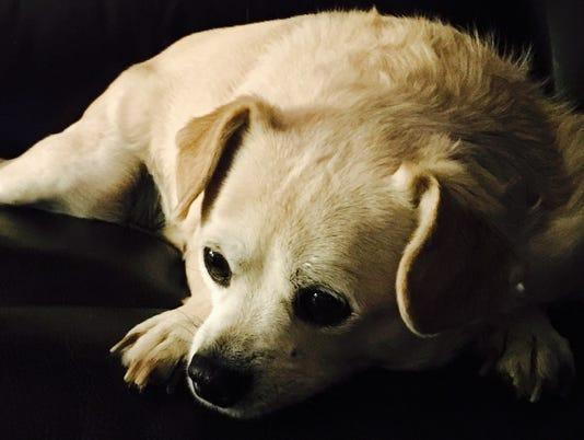Pet Portraits: Pancho