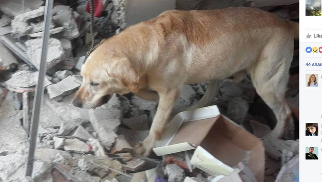 A rescue dog that helped find and pull people from rubble after an earthquake in Ecuador died last week.