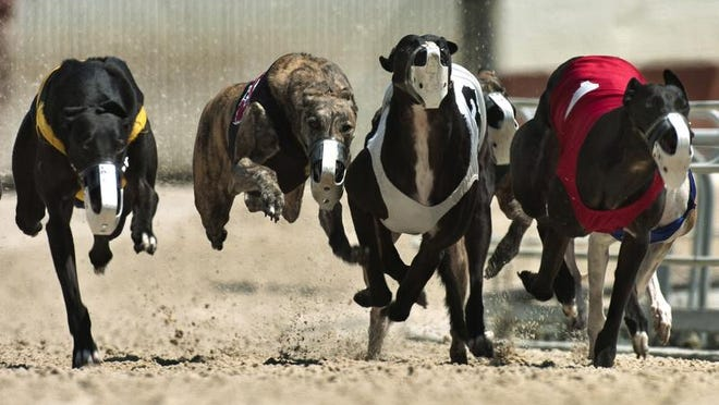 File photo: Naples Fort Myers Greyhound Racing and Poker in Bonita Springs.