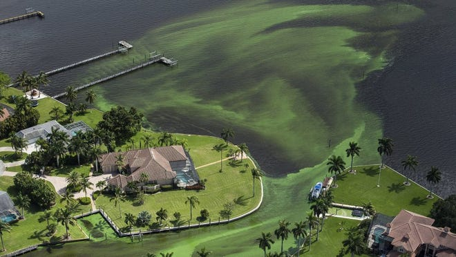 An aerial photo shows blue-green algae enveloping an area along the St. Lucie River in Stuart, Fla., Wednesday, June 29, 2016 Officials want federal action along the stretch of Florida's Atlantic coast where the governor has declared a state of emergency over algae blooms. The Martin County Commission is inviting the president to view deteriorating water conditions that local officials blame on freshwater being released from the lake, according to a statement released Wednesday. (Greg Lovett/The Palm Beach Post via AP)