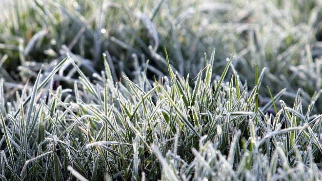 AP Photo/Scott Heppell   Frozen blades of grass are seen in the heavy frost.