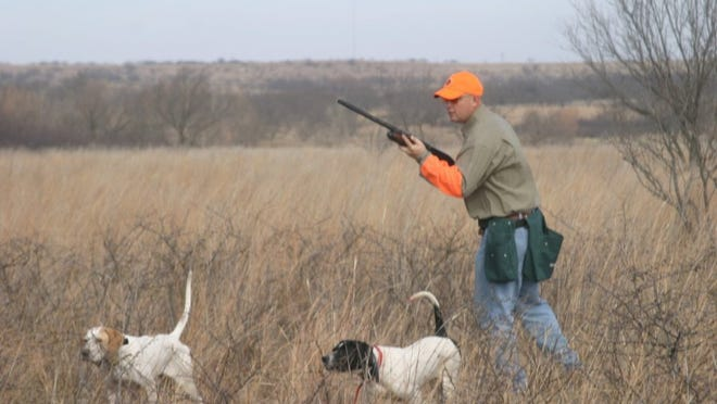 Photo by John Gill A look at a West Texas quail hunt