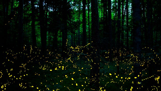 Great Smoky Mountains National Park is offering a limited number of parking passes for the firefly spectacle.