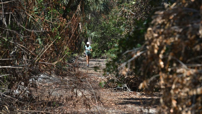 Stephanie Hahn, 64, of Orchid Island Golf and Beach Club, jogs south through fallen tree branches that litter the north side of Jungle Trail off County Road 510 on Sept. 28, 2017, in Indian River County.