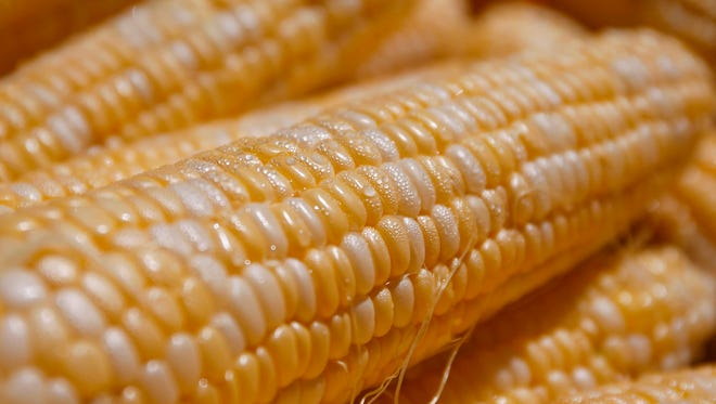 Thousands of ears of corn were served up during the Sweet Corn Festival in Adel on Saturday, Aug. 13, 2016. Organizers said they have 14,000 ears of sweet corn, which they hand out for free to hungry festival goers.
