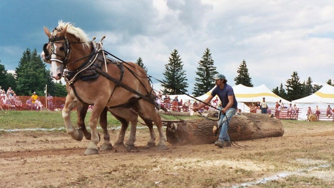 A team of horses at work during the pulling contest at a previous Woodsmen Show.