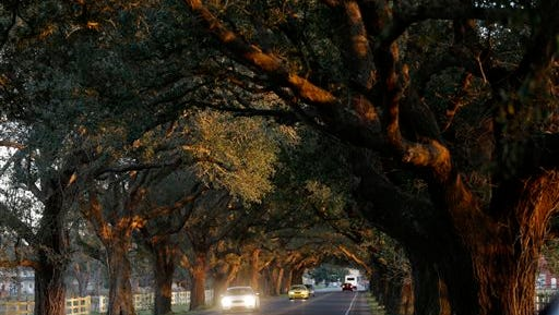 Cars pass under live oaks, alongside the Mississippi River levee in St. Bernard Parish, La., Friday, Feb. 13, 2015. The span of cycling and walking trails along the Mississippi River is reaching into new territory: Down river from the French Quarter into bucolic and working-class St. Bernard Parish, a slice of Louisiana that suffered even worse damage than the metropolitan areas of New Orleans from Hurricane Katrina. This levee-top trail is part of a greater vision to construct riverside pathways from the Mississippi's headwaters in Minnesota all the way to the Gulf of Mexico. For the hurricane-battered locals, some of whom have been hit by severe flooding even since Katrina, this trail represents a much-needed bright spot and boost in the area's quality of life. (AP Photo/Gerald Herbert)