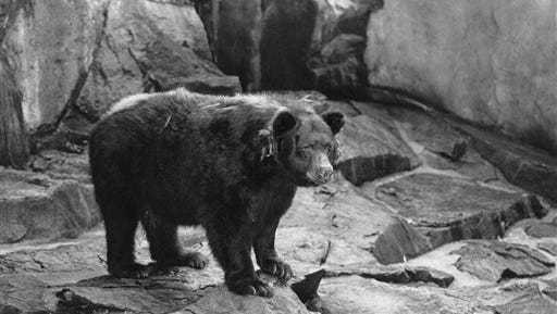 This file photo shows the original Smokey the Bear, symbol of forest fire prevention is shown in his National Zoo home in Washington, D.C.Smokey died in 1976 and was returned where he was  found as a cub with burned paws in 1950 in Capitan N.M.  Smokey Bear was created in 1944 because of fears that enemy shelling from Japan would cause forest fires while most U.S. firefighters were in battle overseas. When the war ended, Smokey stuck around _ and he is now at the center of the longest-running public service announcement campaign in U.S. history. Research shows he is known by 96 percent of American adults and ranks near Mickey Mouse and Santa Claus for name recognition.