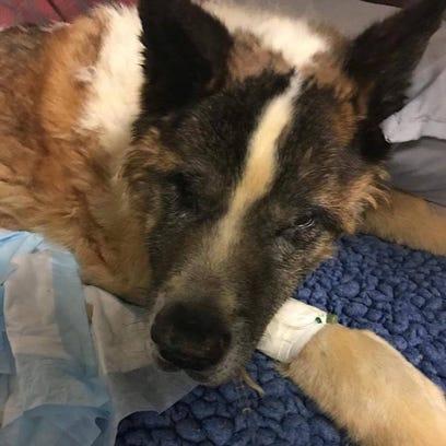A dog left at Oradell Animal Hospital Nov. 3, 2017.