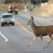 An estimated 1 in 103 drivers in North Carolina will hit a deer, compared to 1 in 169 across the country.