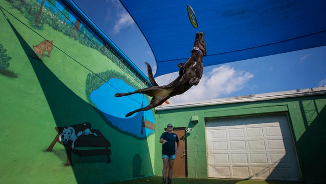 """Crystal McClaran, owner of Bo Nose, a K9 training, daycare and boarding facility in Cape Coral, plays catch with """"Storm"""", 2 , a black Dutch shepherd, Monday February 13."""
