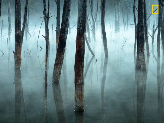 Dead trees in a natural dam, from an enchanted forest.