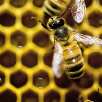 A Brookfield committee will consider a whether beekeeping should be allowed in the city. The issue arose after a resident set up a beekeeping operation and the city shut it down.