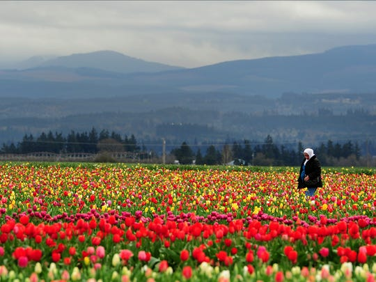 The Wooden Shoe Tulip Festival can be a kaleidoscope of color, but make sure to go when the tulips are in full bloom so you can get to most out of your trip. The festival runs the end of March  through April.