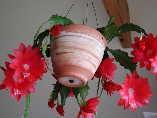 Gardening-Orchid Cact_Schu.jpg