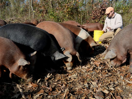 A file photo of Evan McCommon from Mahaffey Farms at his farm.