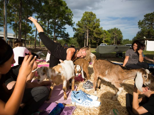 Stacie Thompson practices a yoga pose with the goats during barnyard yoga at Good Fortune Farm in Lehigh Acres on Sunday, April 30, 2017. Participants practiced an alignment focused yoga surrounded by goats and chickens.