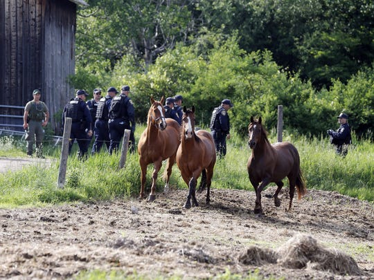 Law enforcement officers walk past horses while searching two prisoners who escaped from the Clinton Correctional Facility on Saturday, June 13, 2015, in Saranac, N.Y. Authorities are in the eighth day of searching for David Sweat and Richard Matt, two killers who used power tools to cut their way out of the prison in northern New York. (AP Photo/Mike Groll)