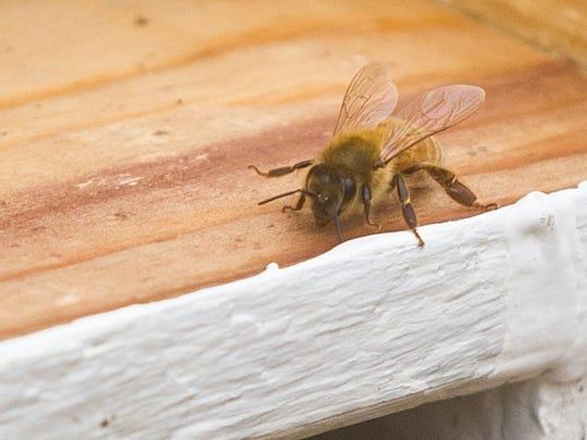 FON 041015 bees 5.jpg