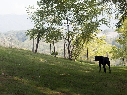 Wade Baker's service dog Honor will remain with the Baker family at their home in Clyde. While he loves to roam the family's property in Clyde, he also offers them immeasurable comfort.