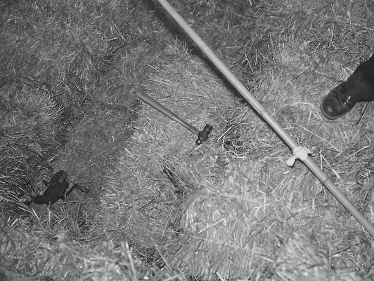 Original crime scene photos from the barn on the Herrick