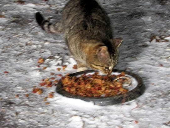 One of the barn cats on the Manzke farm is thankful