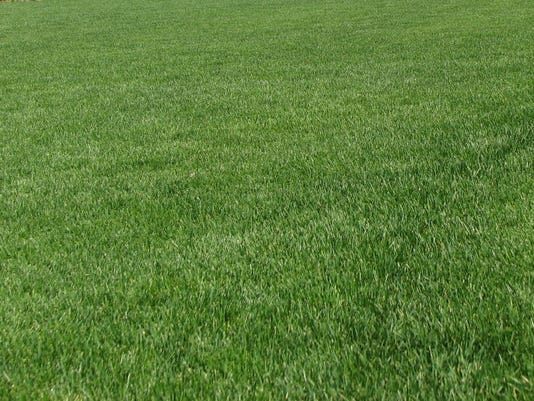 Spring Lawn Care Reseeding Tips To Fix Bare Spots Thin Grass Stands