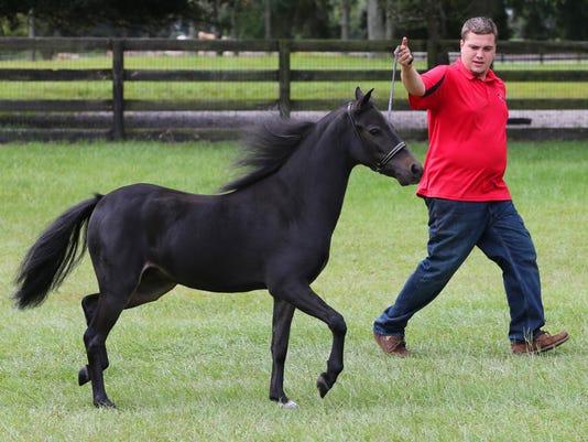 Minature Horses_holm.jpg