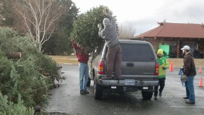 Keep Truckee Meadows Beautiful volunteers help unload a Christmas tree for recycling in 2013.
