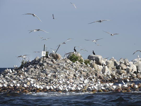 Many species of birds gather on Lake Mille Lacs' Hennepin