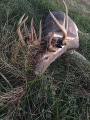 Billings hunter Curtis Russell shot this 22-point whitetail, which turned out to be a female with antlers.