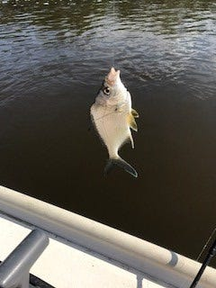 Fish caught by Ron Bern.