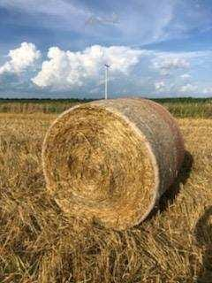 The straw that is left behind the combine is baled and will be used for bedding cattle.