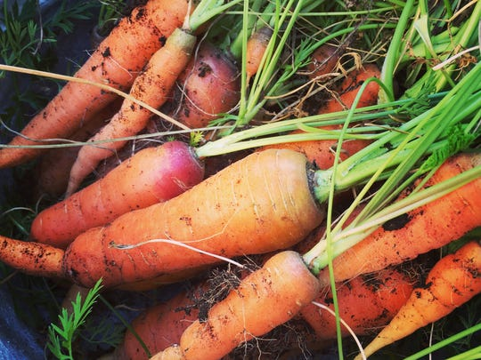 Vegetables do best with morning sun and they should have at least six hours of sunlight each day.