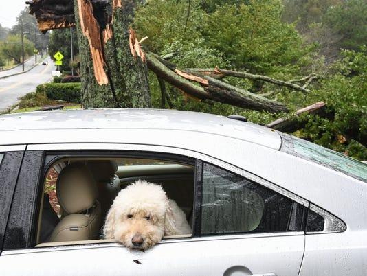 Hurricane Irma Atlanta cleanup