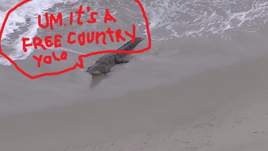 Yes, that's crocodile. Yes, it's on the beach. No, it's not actually talking.