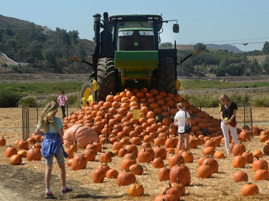 A tractor sits atop a mountain of pumpkins at an earlier Fall Harvest Festival at Underwood Family Farms in Moorpark.