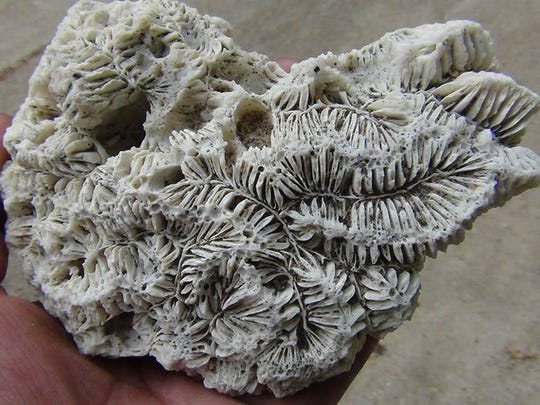 North wind deposits treasures on Lake Huron beaches