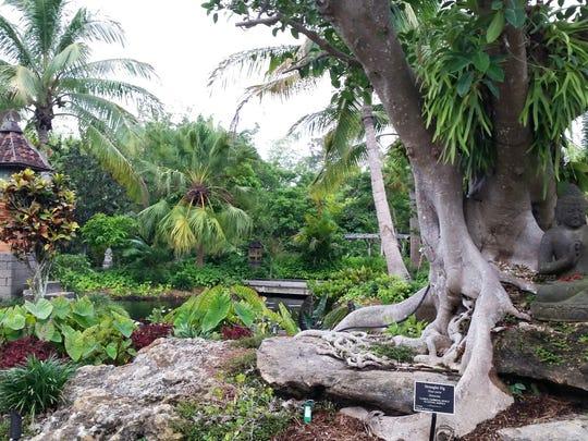 A strangler fig grows in the Asian Garden at Naples Botanical Garden on May 4, 2016.