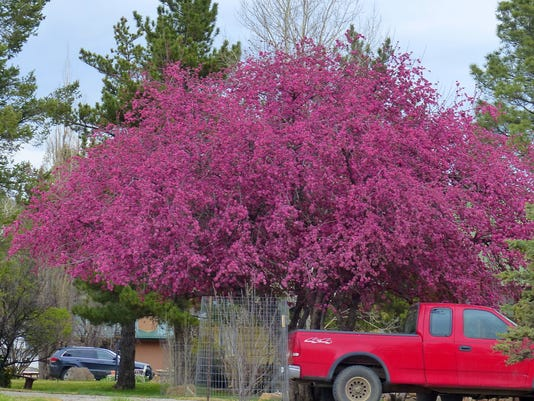 spring blossom-clash-of-colors