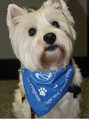 Fort Worth Therapy Dog Training
