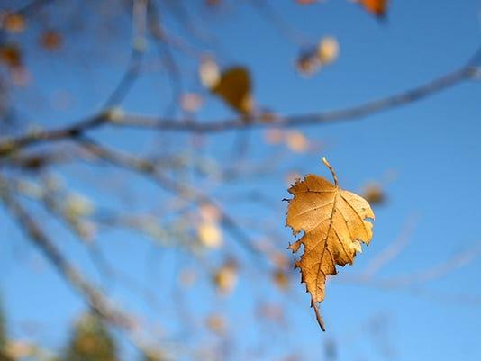 A leaf twists in the breeze as it hangs from the thread of a spider web on Bainbridge Island on Thursday. (MEEGAN M. REID |  KITSAP SUN)