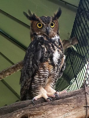 Hollywild visitors this weekend can submit names to be given to the park's first owl in residence, a great horned owl that was injured when discovered.