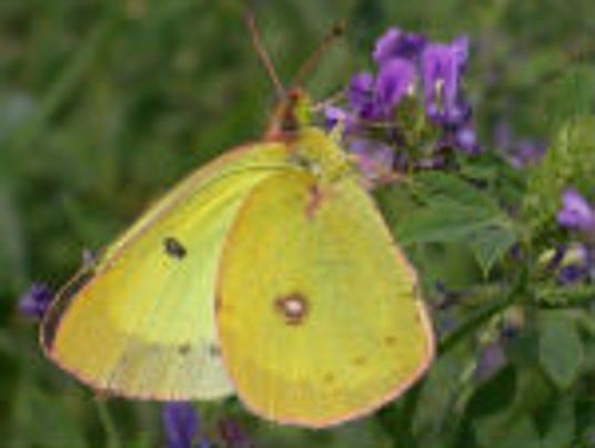 butterfly tour.jpg