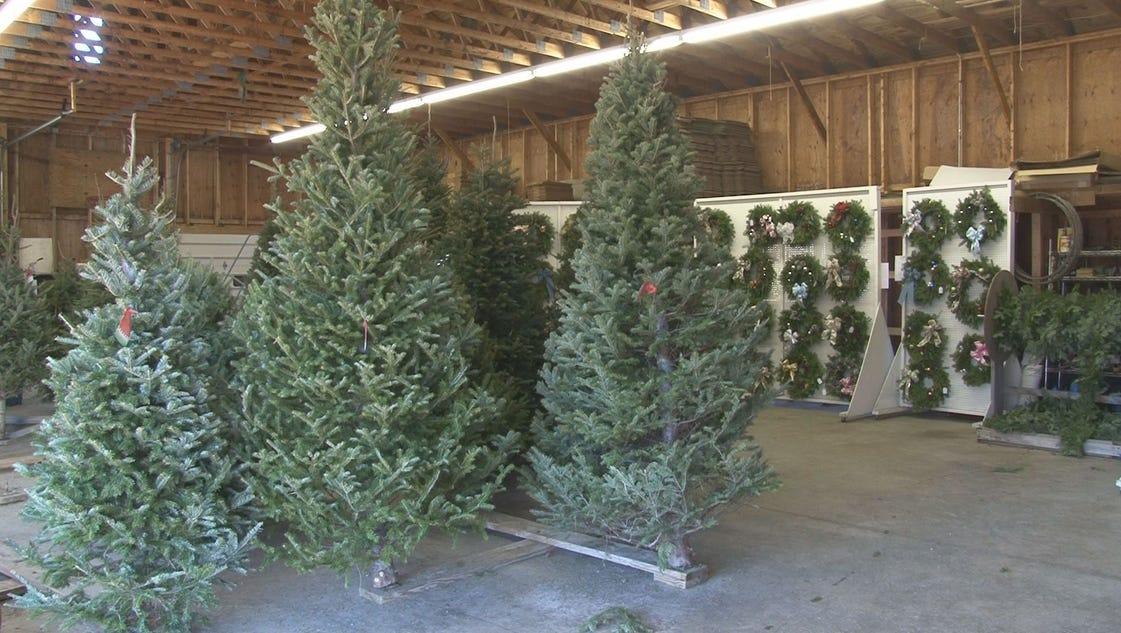 Where do the leftover christmas trees go for Where did christmas trees originate from