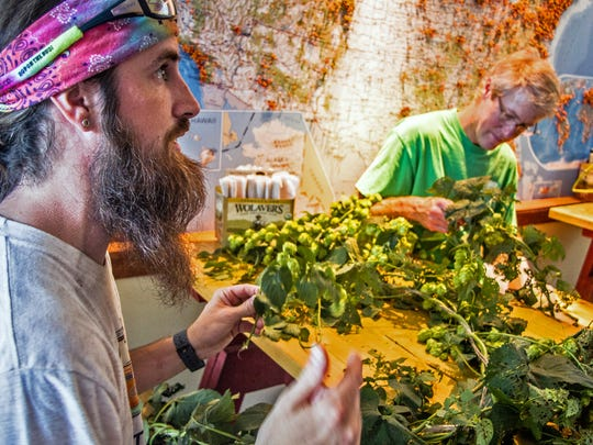 Mike Gerhart (left) and Sean Lawson, brewers at Otter Creek Brewing and Lawson's Finest Liquids, pick hops from the vine for their collaboration beer, Double Dose, in August 2014.