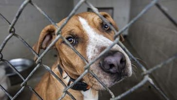 Shelter reducing adoption fees before move